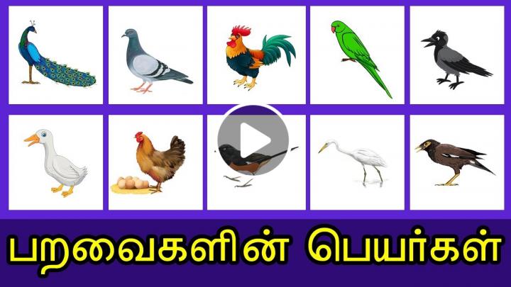பறவைகளின் பெயர்கள் Kids Learn Birds Name